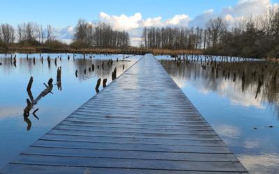 De mythe van het verdronken bos – en wat dit met jou als ondernemer te maken heeft